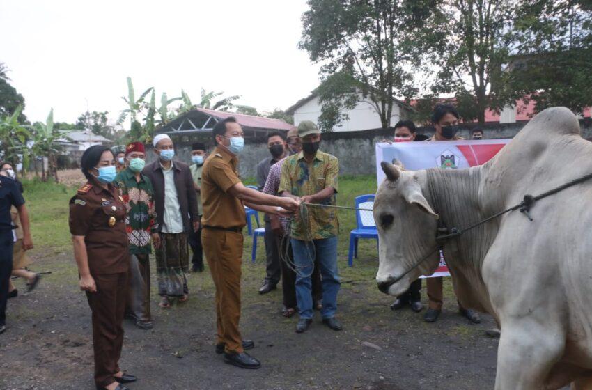 Walikota Salurkan Hewan Kurban Ke Lima Mesjid di Tomohon